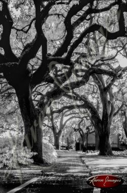 black and white image of Savannah Georgia