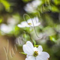 Botanicals - Color