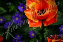 Kuekenhof-Gardens-Netherlands_09