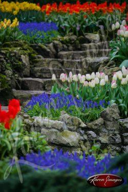 Kuekenhof-Gardens-Netherlands_13