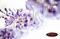 Wisteria_Images_Atlanta_Art_Photography_01