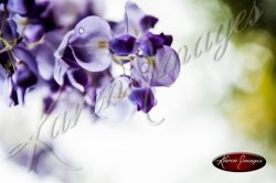 Wisteria_Images_Atlanta_Fine_Art_Photography021