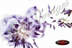 Wisteria_Images_Atlanta_Fine_Art_Photography_014