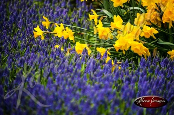 Kuekenhof-Gardens-Netherlands_01.jpg