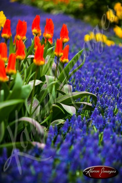 Kuekenhof-Gardens-Netherlands_03
