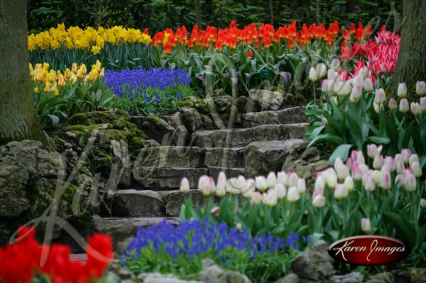 Kuekenhof-Gardens-Netherlands_14