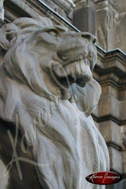 Budapest Proud Lion