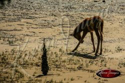 Wild Horse on Cumberland Island National Seashore_001