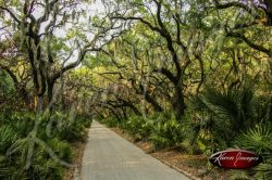 Cumberland Island National Seashore_006