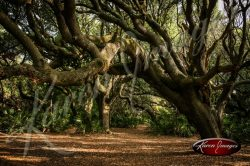 Cumberland Island National Seashore_007