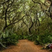 Cumberland Island - Color