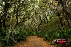 Cumberland Island National Seashore_008