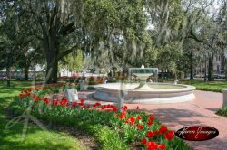 Fine Art Pictures of Savannah GA Pictures -¬ KarenImages 030