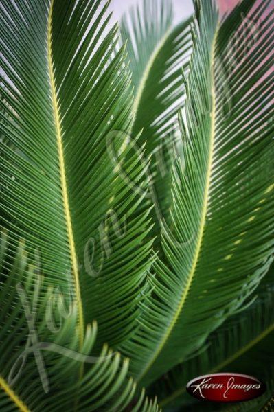 Palm Leaves Savannah Georgia