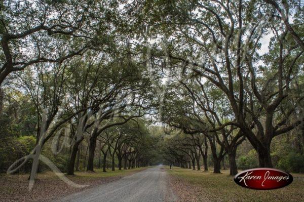 Wormsloe Plantation Driveway Savannah Georgia