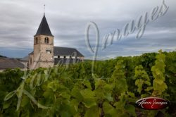 vineyard in champagne fance route de champagne