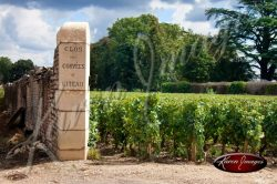 French vineyard in meursault with clos