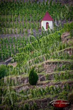 Cote Rotie Vineyard in France with Gnome House