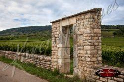 Vineyard Clos in Meursault France