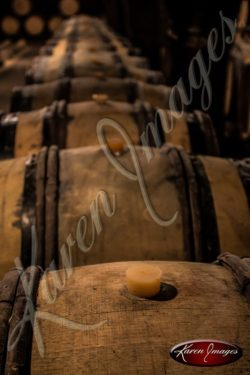 barrels of pinot noir in a cave in bourgogne france
