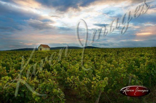 Cote de Beaune Vineyard Bourgogne France burgundy