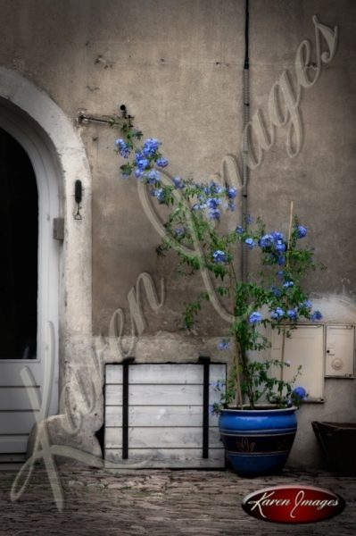 Country french scene of blue flowers in a pot Beaune France burgundy bourgogne