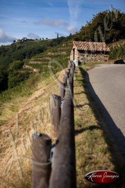 Roadside view of vineyard cote rotie France