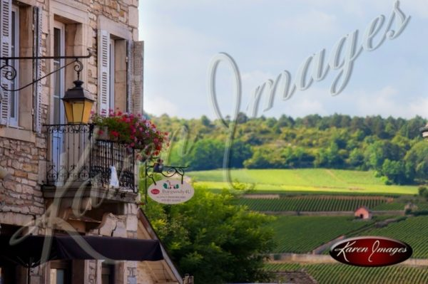 View of Vineyard in Meursault France from Town Square