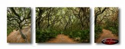 Set of 3 images of cumberland island wilderness in color