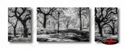 Set of 3 images of savannah live oaks in forsyth park write square pulaski square black and white