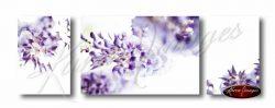 Set of 3 wisteria blossom images