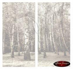 Birch trees from Prague hrad