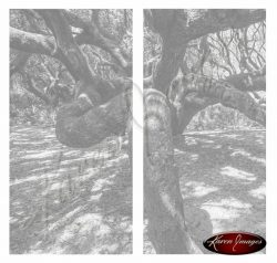 black and white live oak crawling