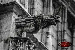 Black and white of brugge belgium stone gargoyle brussels griffon falcon eagle