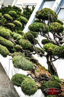 Truffula Tree san francisco color fine art photography