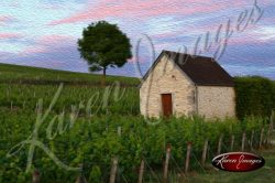 sunset in chablis france grand cru vineyards