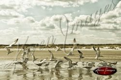 image of sea gulls birds coast beach sea island