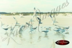 image of sea gulls birds coast beach sea island