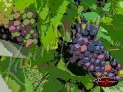 Cartoon Images of France wine beaune reims vineyards pinot noir