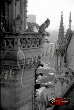black and white image of notre dame cathedral paris france gargoyles seine