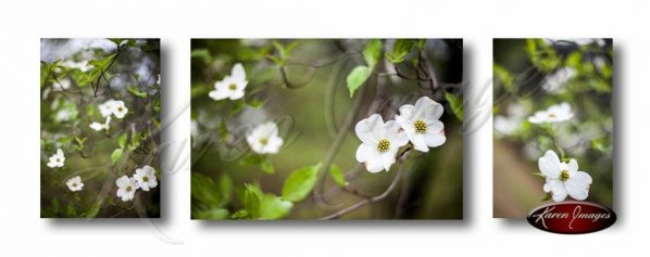 Set of 3 images of dogwood blossoms in color